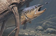 How to Paint Animals in Acrylic Fly Fishing, Fishing Boots, Fishing Hole, Women Fishing, Trout Fishing, Saltwater Fishing, Fishing Shirts, Fishing Lures, Bass Fishing Pictures