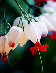 欣赏/从未见过的奇花异草,美得不可思议!