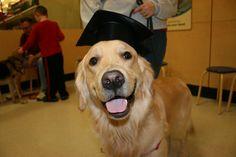Milo just passed Intermediate class.