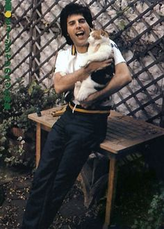 Music and more...: Rockstars and their cats... Freddie Mercury