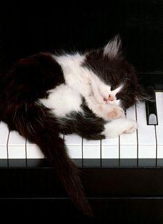 cute kitty...