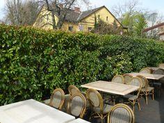 Ezeket ültesd tuja helyett | Gardenista Outdoor Furniture Sets, Outdoor Decor, Garden, Home Decor, Garten, Decoration Home, Room Decor, Lawn And Garden, Gardens