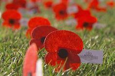 NZ ANZAC poppies