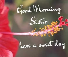 good-morning-sister-have-a-sweet-day Good Morning Sister Images, Good Morning Beautiful Pictures, Good Morning Nature, Good Morning Tuesday, Good Morning Quotes For Him, Good Morning Prayer, Good Day Quotes, Good Morning Photos, Good Morning Gif