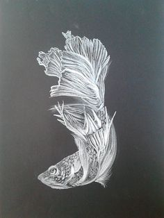Siamese fighting fish (betta) Dibujo en cartulina negra canson y lápiz markin.