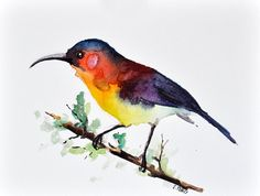 ORIGINAL Watercolor bird painting, Rainbow Colored Bird, 6x8 inch Bird Illustration SALE