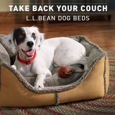 Take back your couch - L.L.Bean dog beds