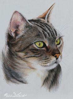 Didoune Watercolor Cat, Watercolor Animals, Jellyfish Light, Pink Jellyfish, Animal Paintings, Animal Drawings, Color Pencil Art, Pastel Art, Cat Drawing