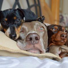 Un estudio revela que el comportamiento de tu perro depende de su tamaño