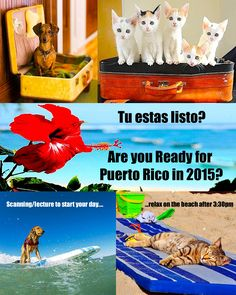 VET GET AWAY! PUERTO RICO 2015!!! For Vets, RDMS, Vet Med students, and Vet techs! Ultrasound/lecture in the morning, beach in the afternoon. Register today at www.sonopath.com