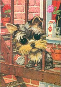 Yorkie, I want this wallpaper for my cellphone.