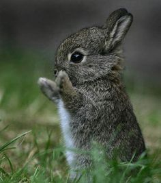 cute-bunny.jpg (429×487)