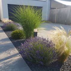 gartengestaltung ideen lavender garden The day can start so beautifully. Back Gardens, Outdoor Gardens, Small Front Gardens, Indoor Garden, Fall Planters, Front Yard Landscaping, Landscaping With Grasses, Ornamental Grass Landscape, Modern Landscaping
