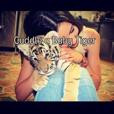 I've petted a baby tiger but she was a the stage where she didn't like cuddling so this is still a bucket list item!