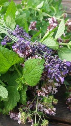 Levandulovo - meduňkovo - dobromyslový sirup Bylinkové zahrádky jsou v plném květu, včelky pilně sbírají pyl, vzduch sladce voní.... Co s úrodou,… Liquor, Smoothies, Homemade, Drinks, Plants, Medicine, Gardening, Syrup, Smoothie
