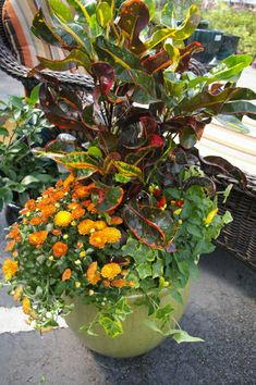 Seeking Assistance With Gardening? Consider This Piece - Easy Garden Plants Container Flowers, Container Plants, Container Gardening, Gardening Books, Autumn Garden, Easy Garden, Garden Ideas, Garden Edging, Fall Containers