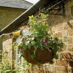 Container Gardening For Beginners Water hanging basket - Plant a flowering hanging basket like a professional does, for a fraction of the cost. Vegetable Garden For Beginners, Gardening For Beginners, Gardening Tips, Flower Gardening, Hanging Plants Outdoor, Plants For Hanging Baskets, Plant Basket, Flower Garden Design, Plastic Flowers