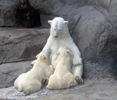 Another example to remind us what mother does for their children, Humans or Animals, No exception