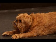 dog training: clicker training
