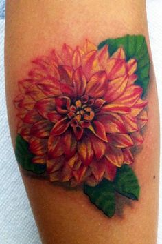 Canyon Webb - red and yellow dahlia