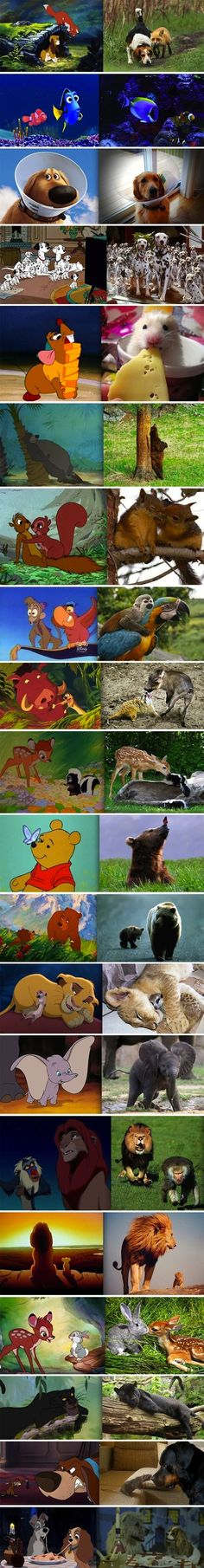 Disney Characters in Real Life. This is so cute! I love the elephant, but my mouse is way more adorable.