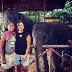 #siamsafari #elephant #elephanttrekking #thailand #gentlegiant by malkia_shairi