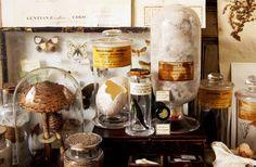 L'ambiance cabinet des curiosités te fascine ? Voici comment l'adapter à ton chez toi, pour pimper ton intérieur à base de reliques intrigantes...