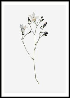 Campanula Flower, plakat i gruppen Plakater hos Desenio AB (8496)