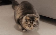 si-jetais-chat-chasse