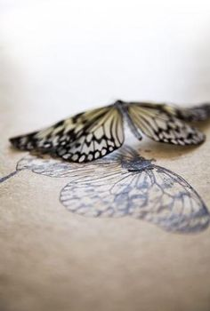 Butterfly rejection