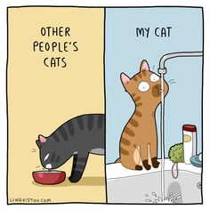 Charming Illustrations Reveal How Weird and Wonderful Cats Really Are Charming Cat Comic Illustrates The Weird and Wonderful Ways of Felines I Love Cats, Cute Cats, Funny Cats, Crazy Cat Lady, Crazy Cats, Comic Cat, Bodega Cat, Illustrator, Cat Calendar