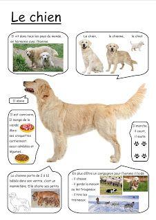 Le Journal de Nounou Sophie: Bilan de la semaine 6 - Le chien