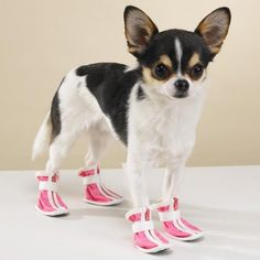 Get A Leg Up On Fashion Footwear with these Paw Sporty Boots! Doggies can step out in style wearing these fashionable boots while taking dog's fashion footwear up a notch and also providing the protection dogs need when enjoying outdoor activities. I Love Dogs, Puppy Love, Funny Dogs, Funny Animals, Taking Dog, Pet Dogs, Dog Cat, Dog Boots, Fluffy Cat