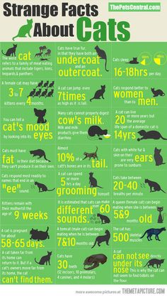 Great facts about cats! #interesting #felines   ...........click here to find out more     http://googydog.com
