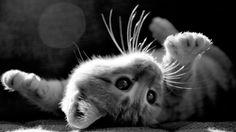 .. by aksigibi.deviantart.com on @deviantART  Too cute to ignore