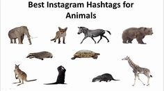 Best Instagram Hashtags, Most Popular Hashtags, Top Tags, Youtube, Movie Posters, Animals, Animales, Film Poster, Animaux
