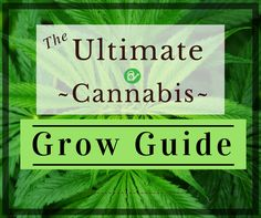 The ultimate guide to grow Cannabis. Comprehensive Cannabis information and in depth growing tutorials. Learn how to grow Cannabis like the masters.
