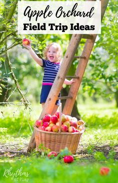 Try some of these apple orchard field trip ideas this fall. Visiting an apple farm is a fun activity for a class field trip or a family adventure whether you homeschool or not. This guide contains everything you need to enjoy harvesting apples this autumn