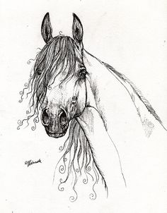 The arabian horse portrait pen drawing