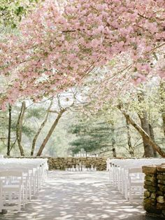 A wedding under cherry blossoms is so romantic! Photo by Elizabeth Anne Designs