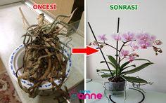 Hair Rainbow, Crochet Doily Diagram, Plant Hanger, Orchids, Orchid Flowers, Succulents, Blog, Diy, Anne