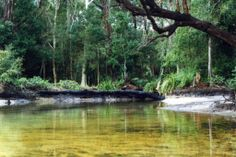 Fresh Water Lakes on Stradbroke Island Australia. South Australia, Western Australia, Stradbroke Island, Location Scout, Countries Of The World, Fresh Water, The Incredibles, Vacation, Landscape