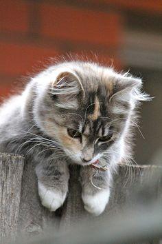 Kitty surveys whether or not to jump. Vanessa Brady