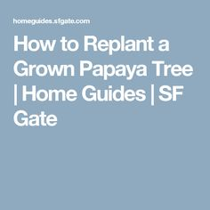 How to Replant a Grown Papaya Tree | Home Guides | SF Gate