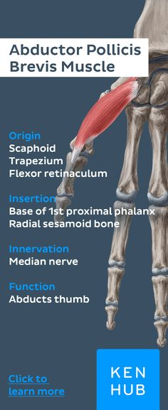 Pin to win! #learn everything about the thenar #muscles with our #anatomy facts on Kenhub!