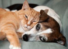 Beagle and cat ♥♥♥