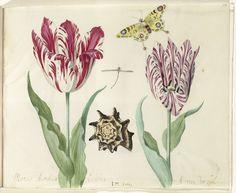 Twee tulpen, een schelp, een vlinder en een libel, Jacob Marrel, 1637.