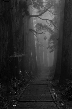 Dark forest path.