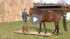 Zirkusschule Teil 2: Stillstehen & freies Rückwärtsrichten Videos, Connection, Horses, Animals, Exercise At Home, Vet Office, Horseback Riding, Animales, Kunst