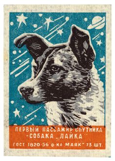 Vintage Images of Canine Cosmonauts from the USSR | Atlas Obscura